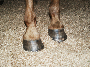 Horse Bedding Wood Pellets
